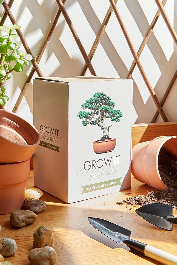 Grow It Bonsai Tree Kit Urban Outfitters