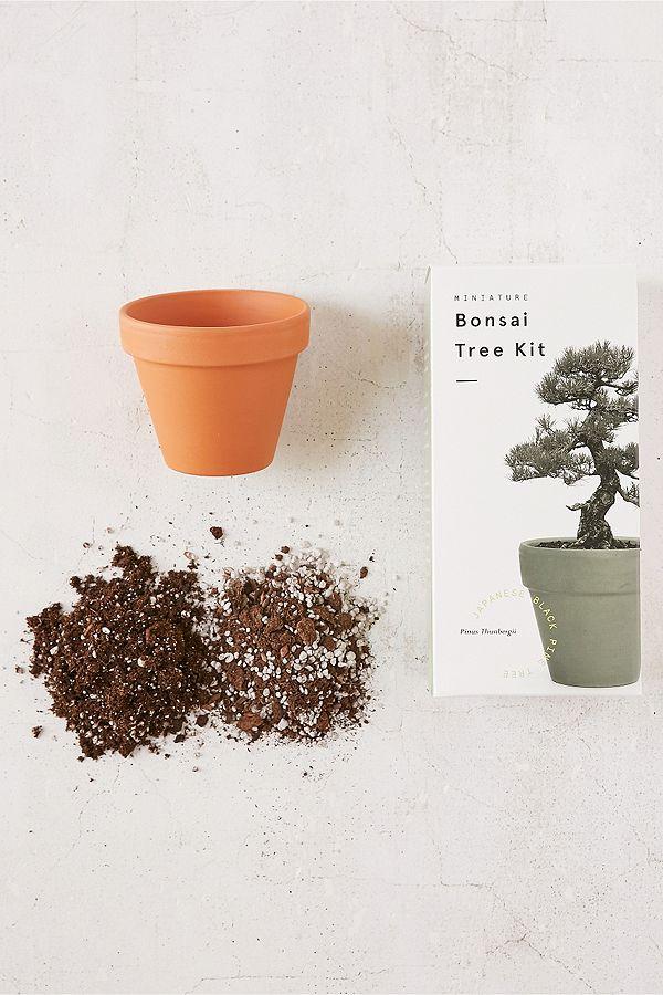 kit de culture arbre miniature dintrieur pin